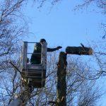 Baumpflege mit Hubbühne